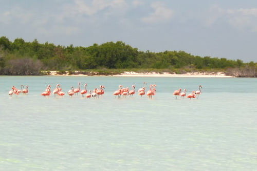 40.000 specimens of pink flamingos stop on the island every year