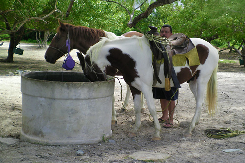 Another way to discover Holbox is through a horseback ride around the island