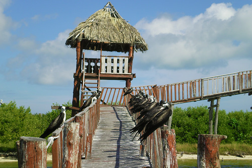 We organize tours to explore the many islands surrounding Holbox